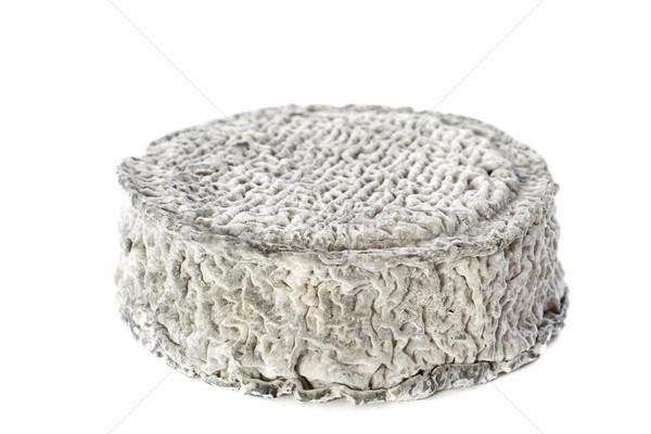 Сыр из козьего молока продовольствие студию белом фоне сырой французский Сток-фото © cynoclub