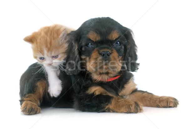 ストックフォト: 子猫 · 子犬 · 白 · 猫 · 黒 · 動物