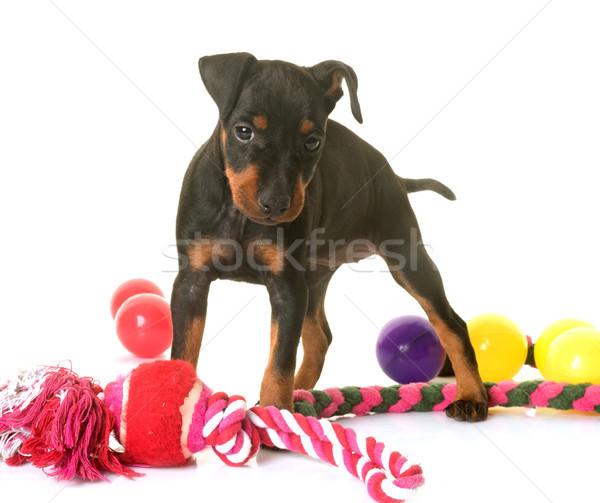 Kutyakölyök terrier fehér labda Stock fotó © cynoclub
