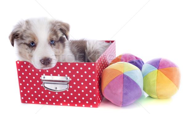 Kutyakölyök juhászkutya doboz portré játékok fehér Stock fotó © cynoclub