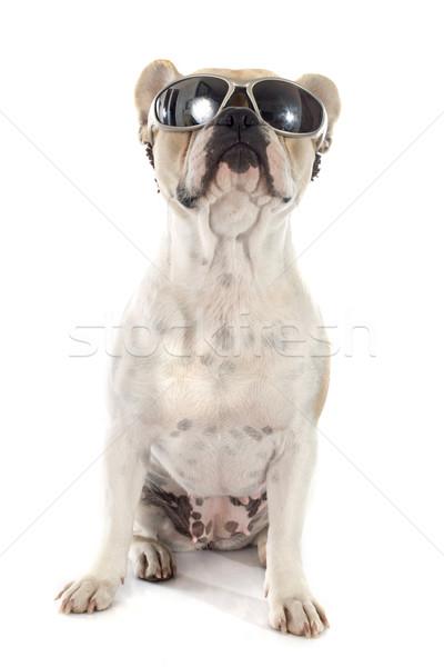 french bulldog  Stock photo © cynoclub