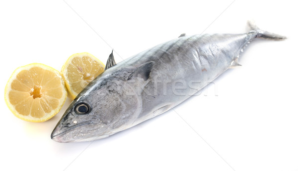 bonito Stock photo © cynoclub