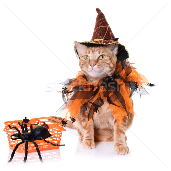 ginger cat and halloween Stock photo © cynoclub