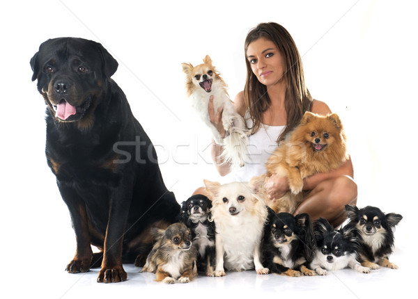 girl and dogs Stock photo © cynoclub