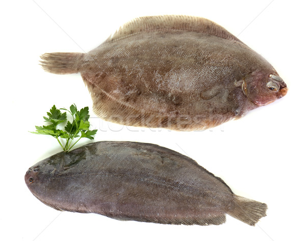 sole fish and lemon fish Stock photo © cynoclub