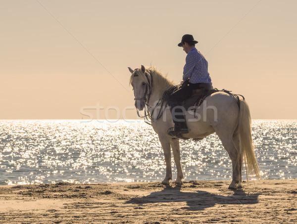 horse rider on the beach Stock photo © cynoclub