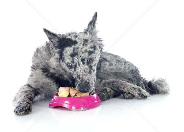 Yeme köpek çoban beyaz kek Stok fotoğraf © cynoclub