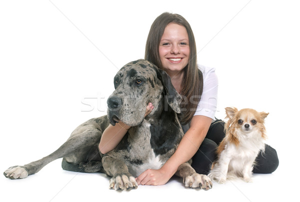 Great Dane, chihuahua and teenager Stock photo © cynoclub