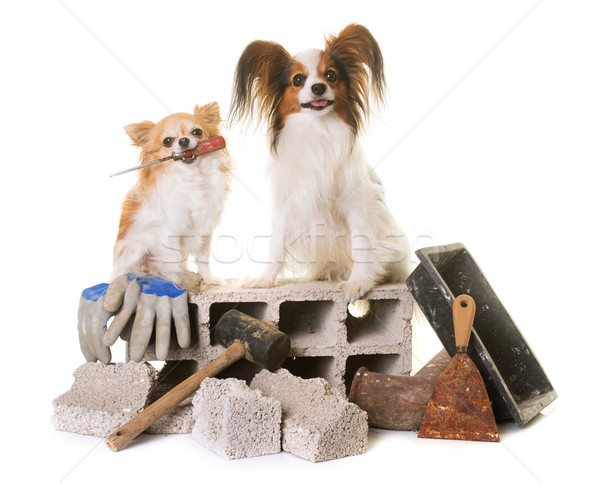 Szczeniak psa kamieniarstwo studio młotek narzędzie Zdjęcia stock © cynoclub