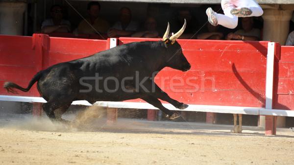 running bull Stock photo © cynoclub