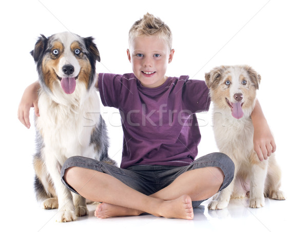 australian shepherds and boy Stock photo © cynoclub
