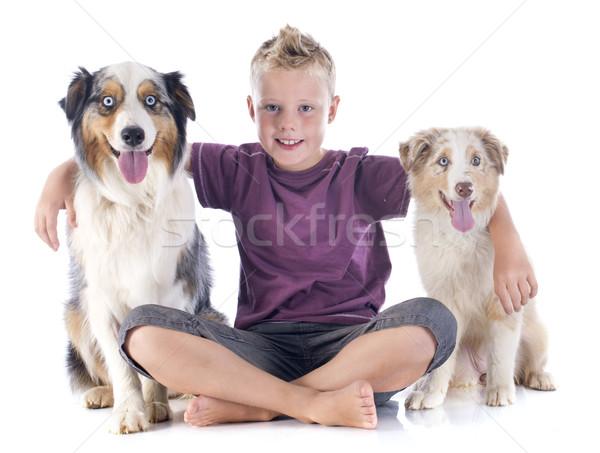 Australisch jongen witte hond Blauw Stockfoto © cynoclub