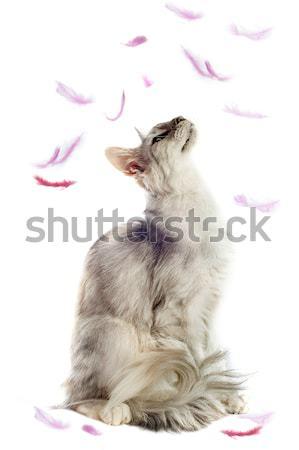 Сток-фото: собака · гончая · белый · студию · мех · Cute