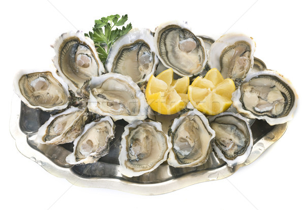 oysters on silver tray Stock photo © cynoclub