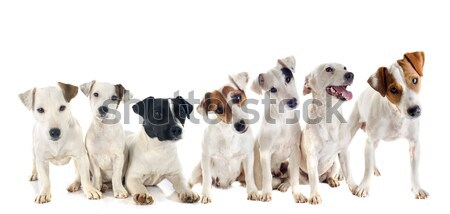 Stock photo: group of pets