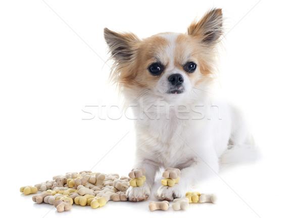 chihuahua and dog food Stock photo © cynoclub