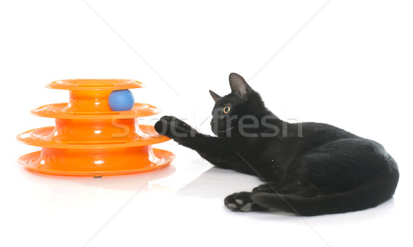 kitten playing with toy Stock photo © cynoclub
