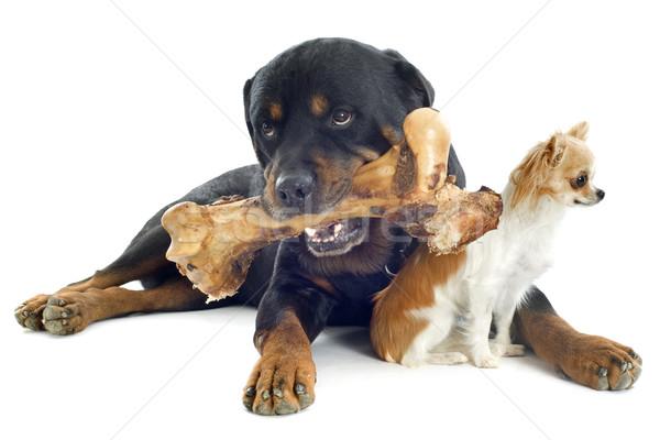 Rottweiler bot portret vrienden vlees Stockfoto © cynoclub