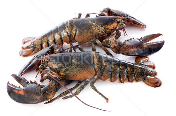 2 食品 動物 料理 クリスマス 石灰 ストックフォト © cynoclub