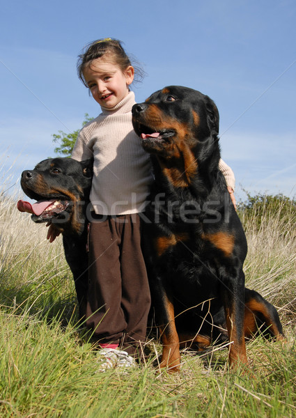 little girl and rottweilers Stock photo © cynoclub