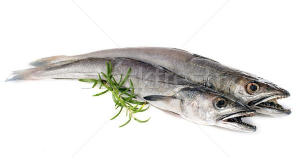European hake Stock photo © cynoclub