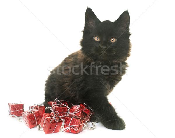 Stockfoto: Maine · kitten · witte · kat · speelgoed · zwarte