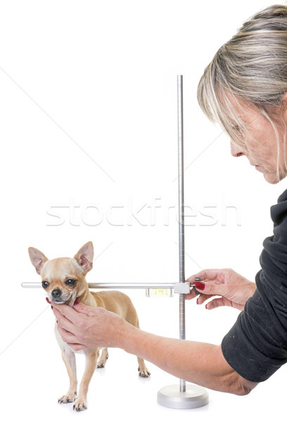 measuring rod for dog Stock photo © cynoclub