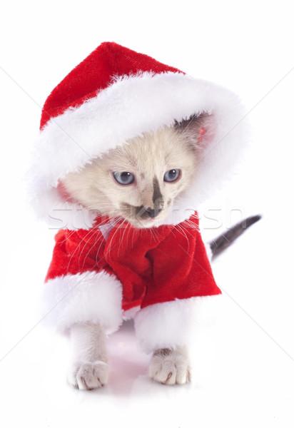 Рождества котенка красивой кошки белый Сток-фото © cynoclub