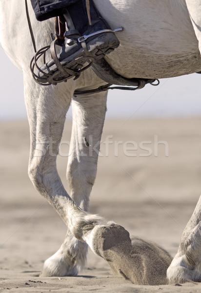 rider on the beach Stock photo © cynoclub