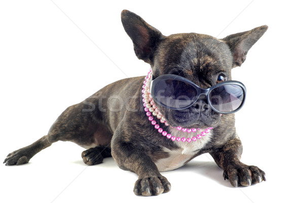 french bulldog and sunglasses Stock photo © cynoclub