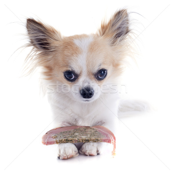chihuahua and meat Stock photo © cynoclub