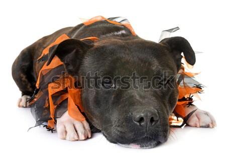 щенков ротвейлер печально белый глазах Сток-фото © cynoclub