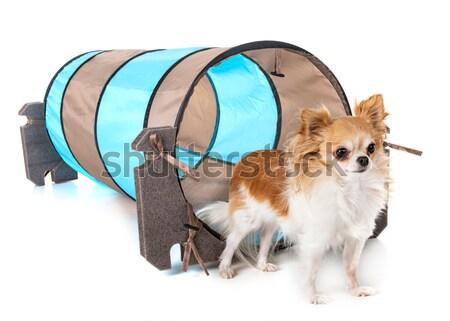 Foto stock: Viaje · bolsa · perros · cachorro · objeto · junto