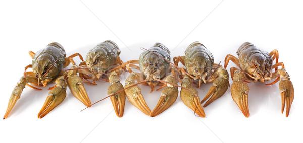 river crayfish Stock photo © cynoclub
