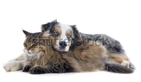dog and cat Stock photo © cynoclub