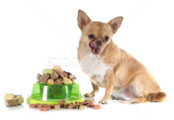 dry pet food and fat chihuahua Stock photo © cynoclub