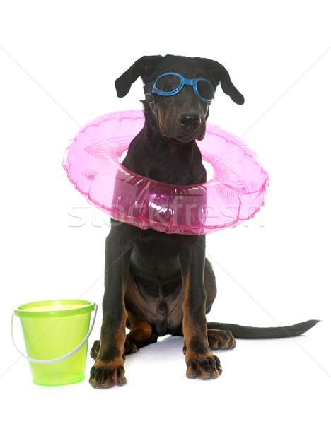 Jeunes chien vacances chiot blanche plage Photo stock © cynoclub