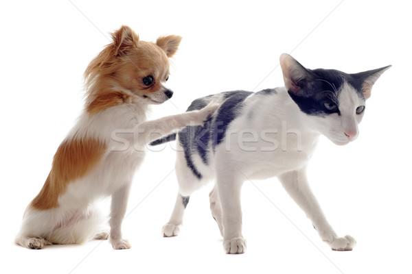 кошки портрет собака друзей студию Сток-фото © cynoclub
