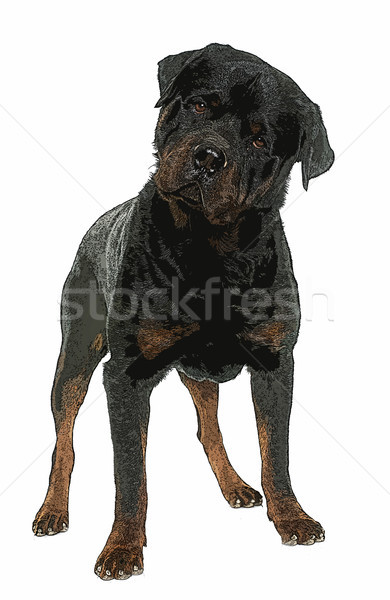 Adulte Homme rottweiler blanche animaux Photo stock © cynoclub