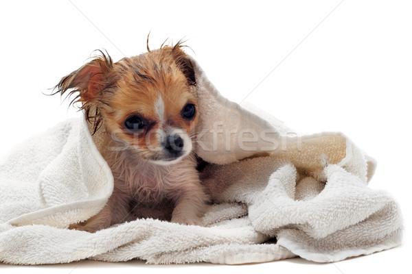 after bath Stock photo © cynoclub