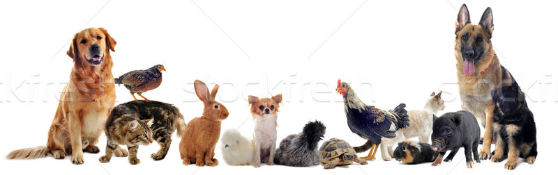 Photo stock: Groupe · animaux · de · compagnie · animal · blanche · chien · chat
