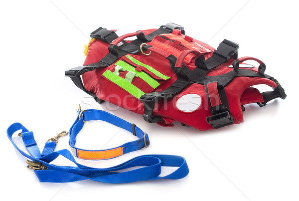 rescue harness for dog Stock photo © cynoclub
