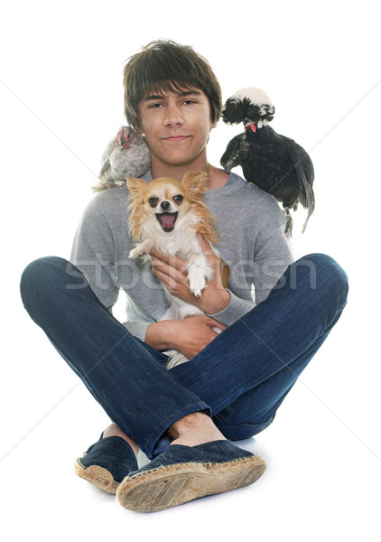 teen, chihuahua and chicken Stock photo © cynoclub