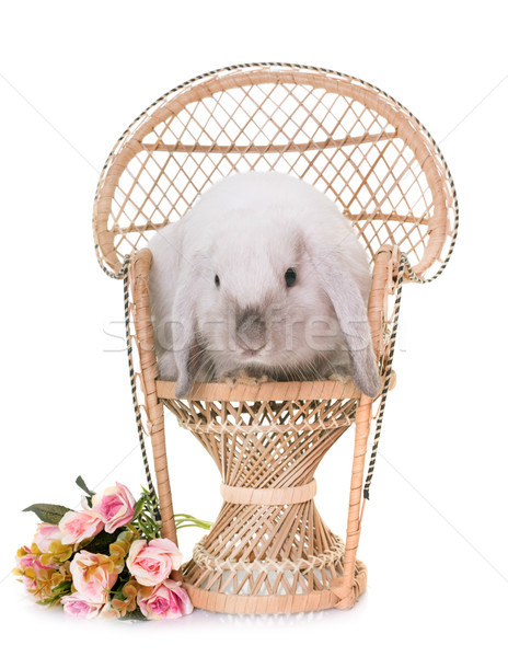 Mini stúdió virág nyúl szék nyuszi Stock fotó © cynoclub