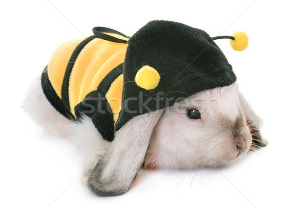мини студию кролик Bunny Bee белый Сток-фото © cynoclub