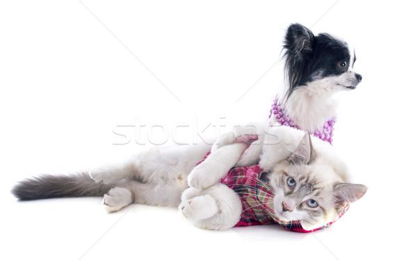 котенка собака кошки синий ювелирные вместе Сток-фото © cynoclub