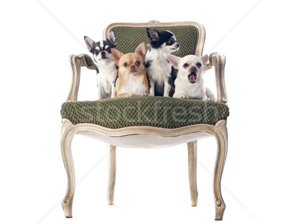 Stock fotó: Antik · szék · fehér · divat · háttér · zöld