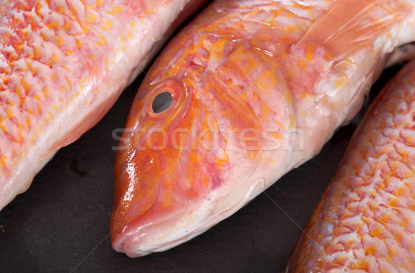Red mullet Stock photo © cynoclub