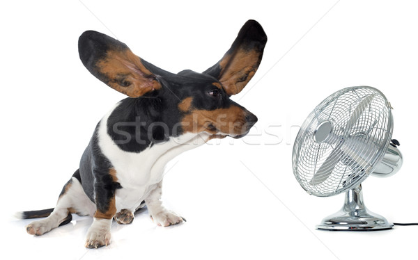 young Basset Hound and ventilator Stock photo © cynoclub