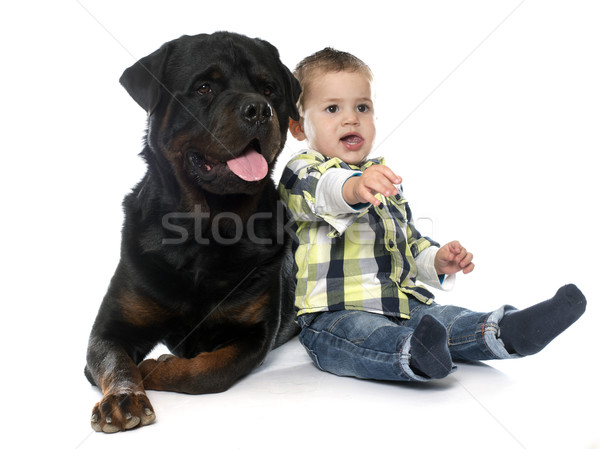 little boy and rottweiler Stock photo © cynoclub